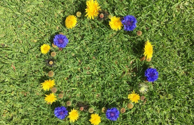 Garden GIFS