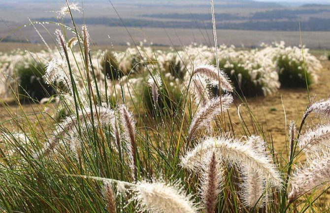 CERES presents 'Indigenous Plants and Bush Tucker'